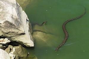erie snake