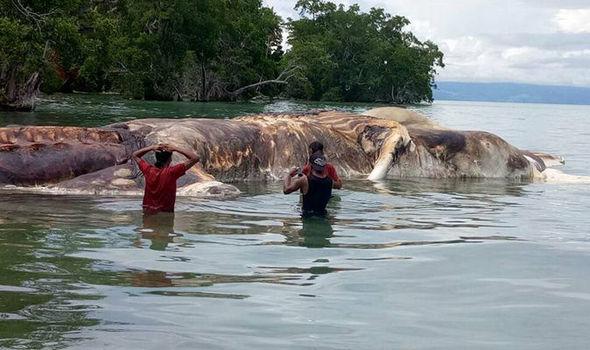 dead sea creature