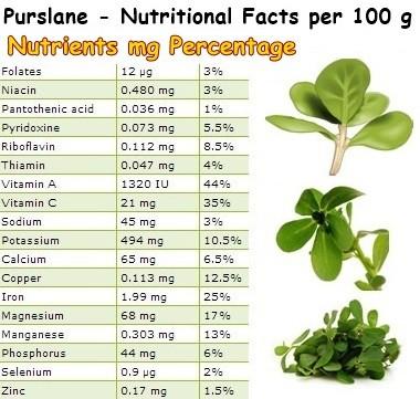 Purslane nutritional