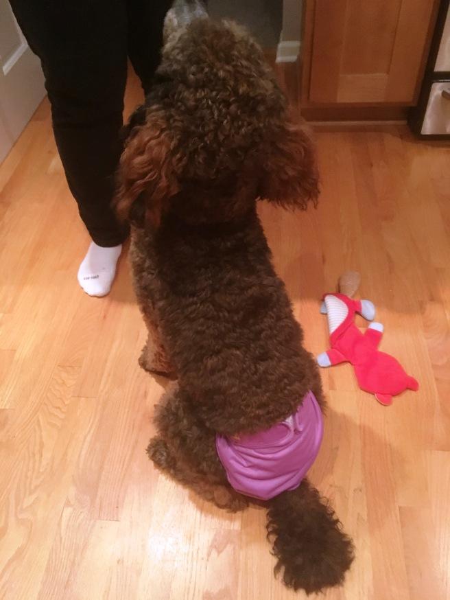 Lola Diaper