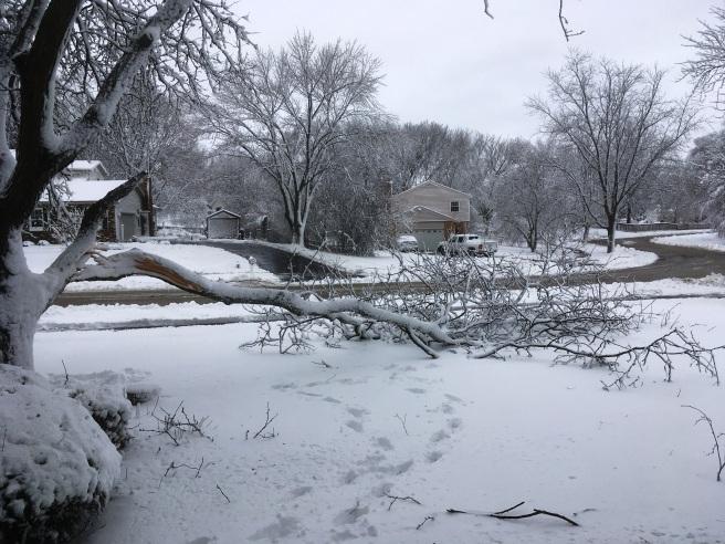 Tree broken.JPG