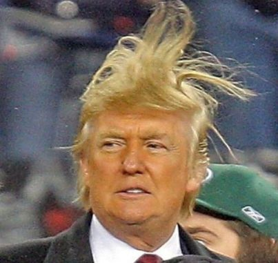 Trump hair wild