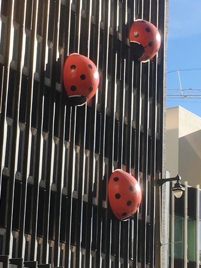 Ladybugs zoom
