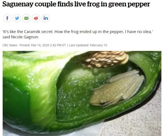 Frog Pepper