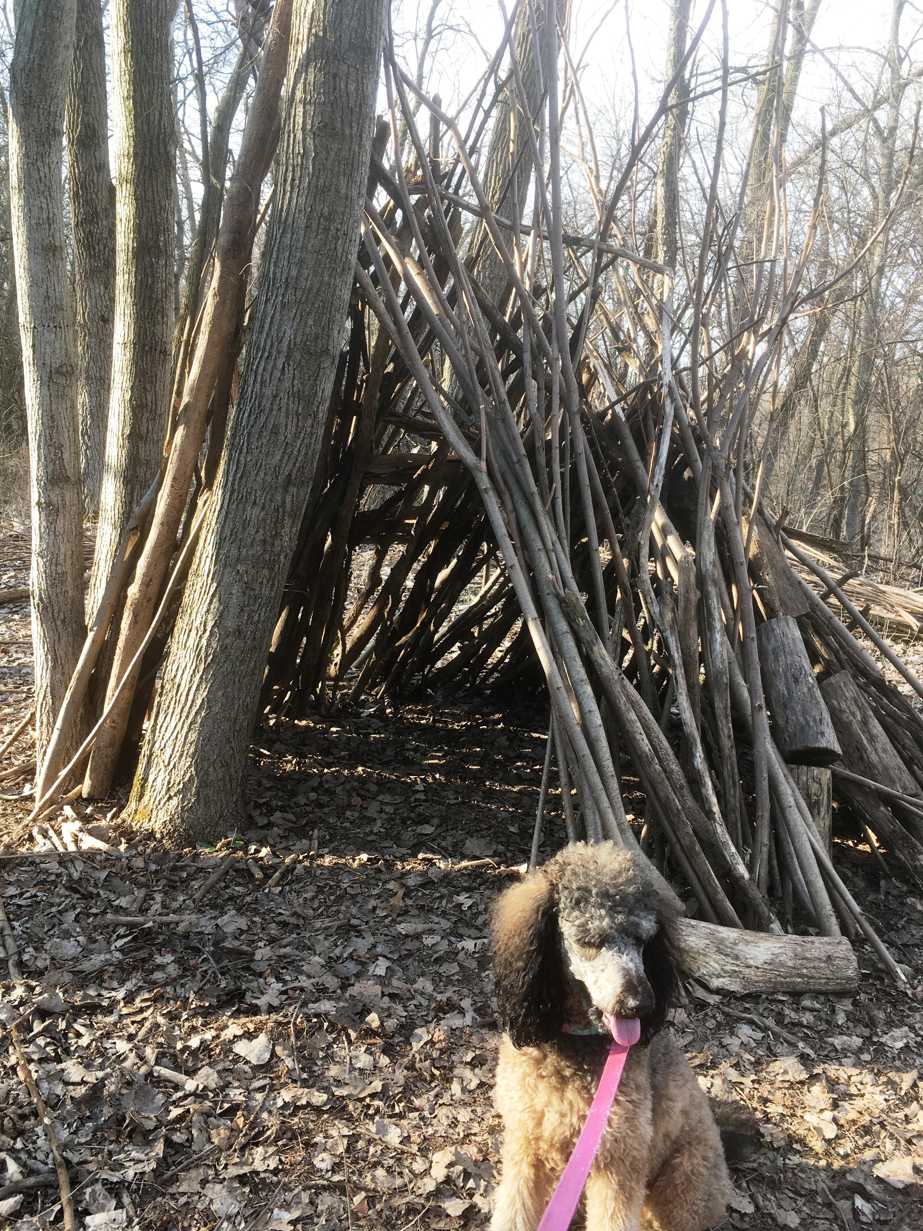 Lola Shelter