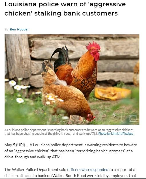 Chicken LA
